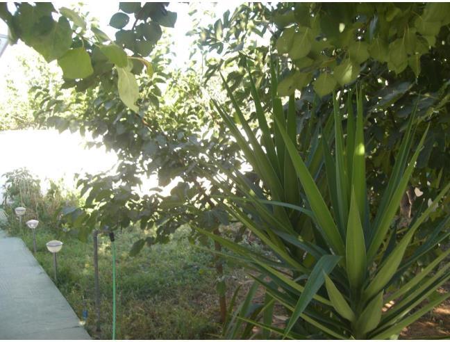 Anteprima foto 8 - Affitto Dimora tipica Vacanze da Privato a Nardò - Villaggio Boncore