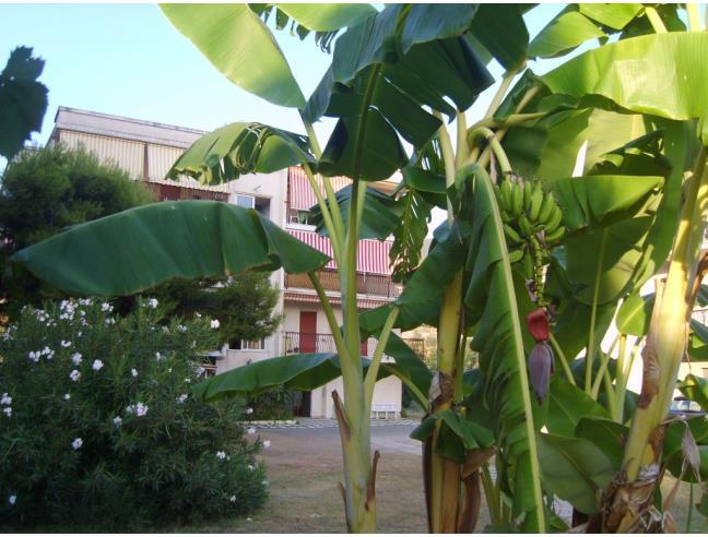 Anteprima foto 4 - Appartamento in Vendita a Nocera Terinese - Marina Di Nocera Terinese