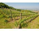 Foto - Albergo/Struttura ricettiva in Vendita a Vicenza - Debba