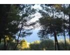 Foto - Affitto Appartamento Vacanze da Privato a Montegiordano - Montegiordano Marina