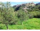 Foto - Terreno Agricolo/Coltura in Vendita a Castroreale (Messina)