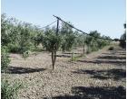 Foto - Terreno Agricolo/Coltura in Vendita a Grosseto - Centro città