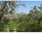 Foto - Terreno Agricolo/Coltura in Vendita a Aprilia - Campoleone
