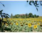 Foto - Villa in Vendita a Orciano di Pesaro (Pesaro e Urbino)