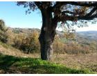 Foto - Terreno Edificabile Residenziale in Vendita a Oratino (Campobasso)