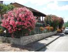 Foto - Villa in Vendita a Calvi (Benevento)