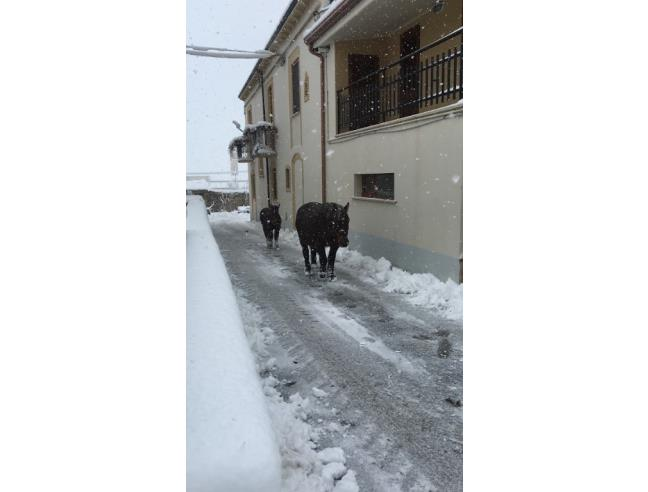 Anteprima foto 2 - Villa in Vendita a Bojano (Campobasso)